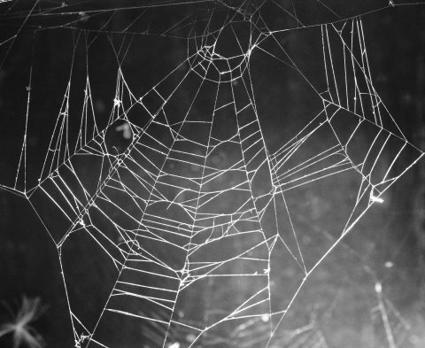 spider-web-doorways